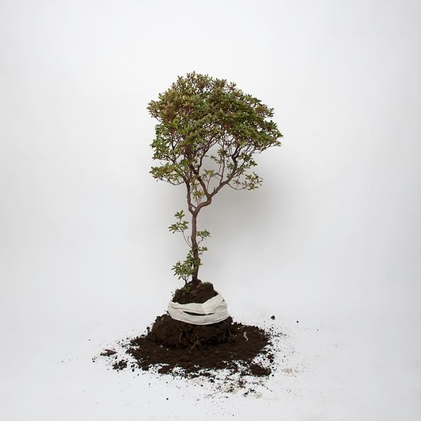 Tree photographed in studio by Petra Stridfeldt